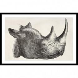RHINO Affiche encadrée 60x40cm - Rhinocéros noir & blanc
