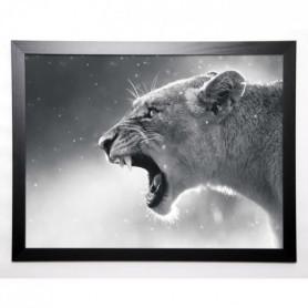 BRAUN STUDIO Image encadrée Lionne 57x77 cm Gris