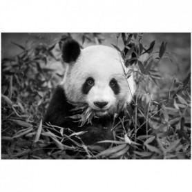 Image encadrée baguette minimaliste Panda