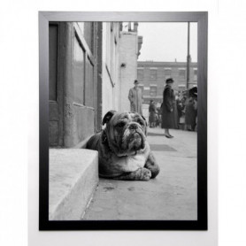 GAY Image encadrée Lazy Bulldog at Camden Town 67x87 cm